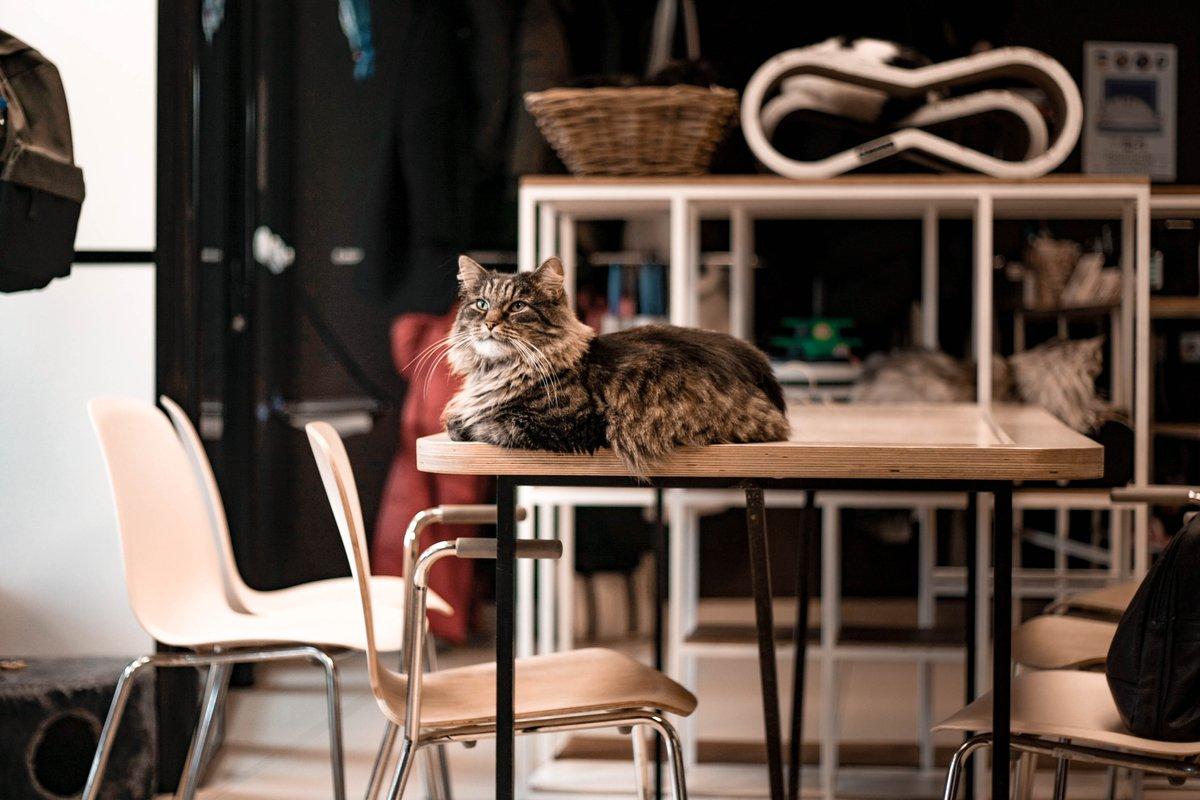 営業自粛したいけれど…全国各地から聞こえる「保護猫カフェ」の深刻な叫び