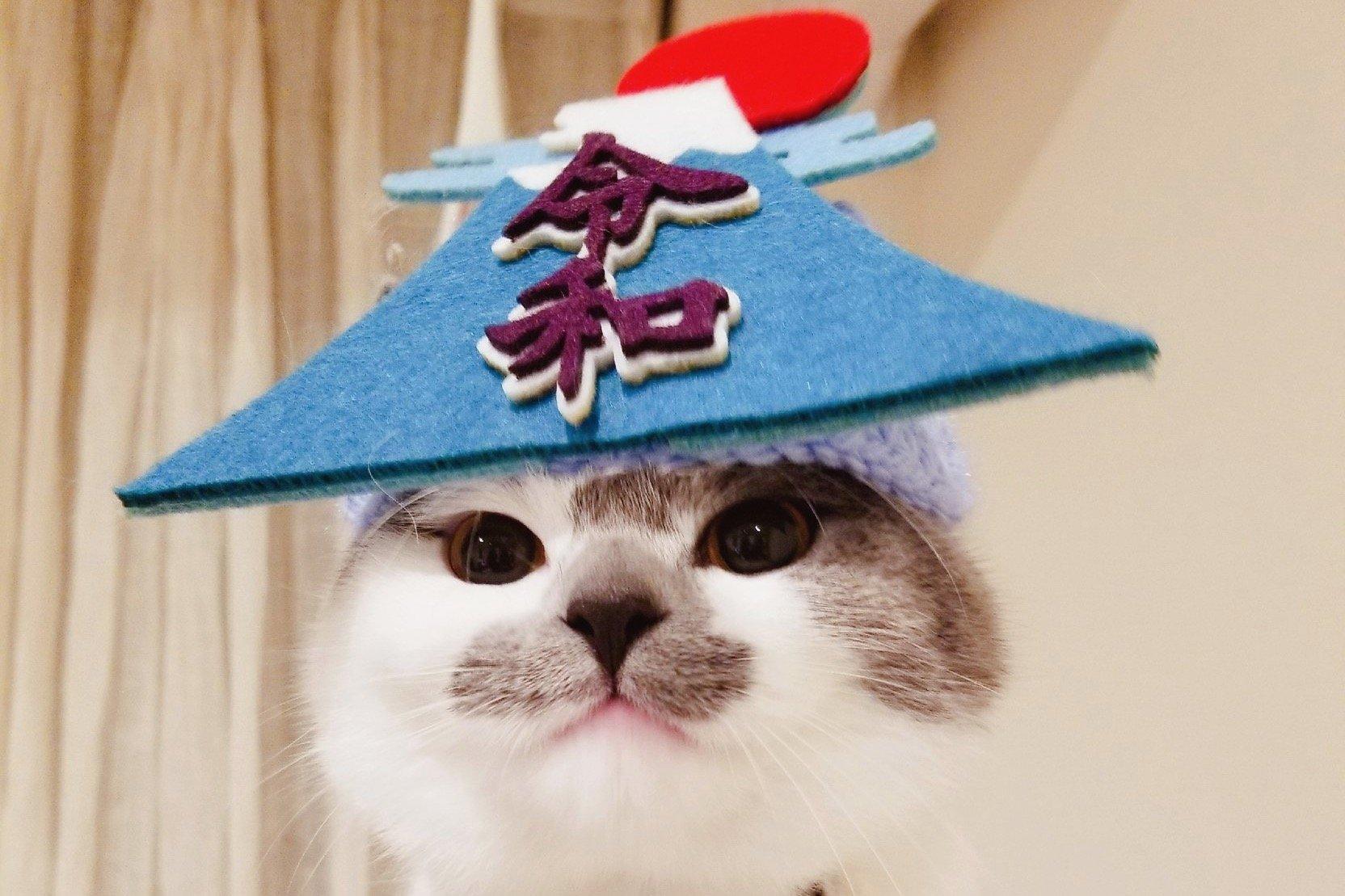 愛猫スコティッシュのさかもとちゃんと一緒に楽しむ「ごはんタイム」が羨ましすぎる…!