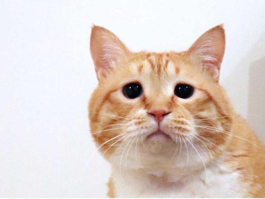 『困り顔』猫、ぐっぴーさんの多彩な表情に癒される♪