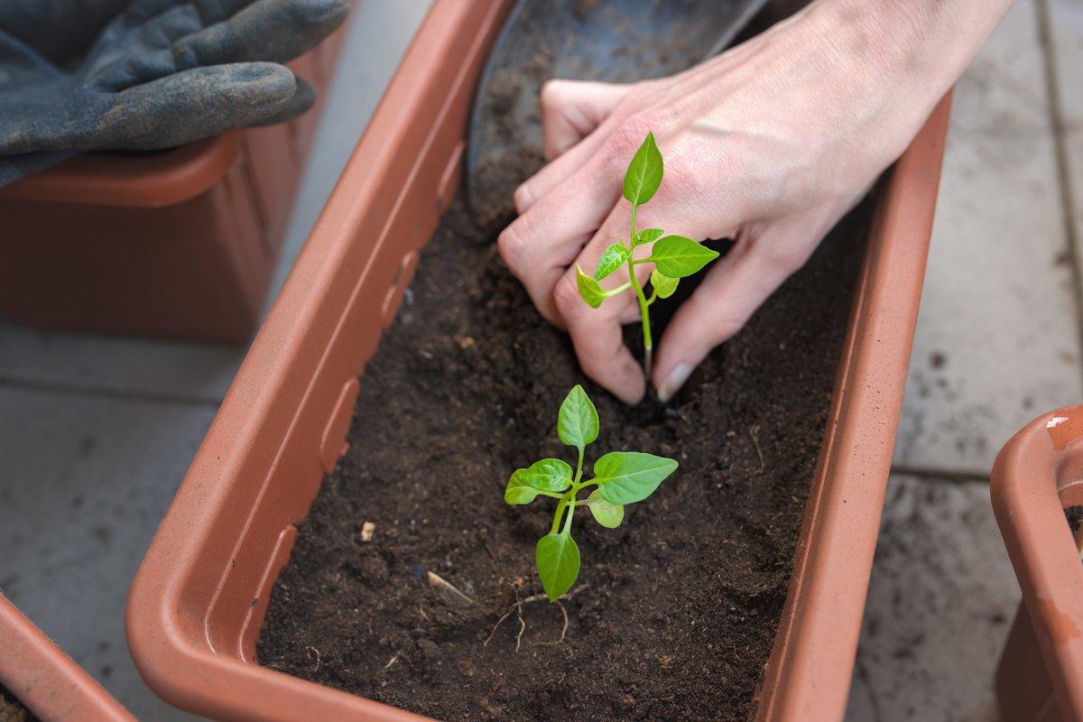 秋冬野菜、育てる前の注意点。夏野菜収穫後の「連作障害」に気をつけよう