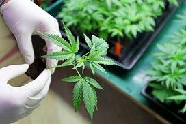 大麻ETFに投資家殺到~日本の知らぬ間に大麻ビジネス急拡大へ