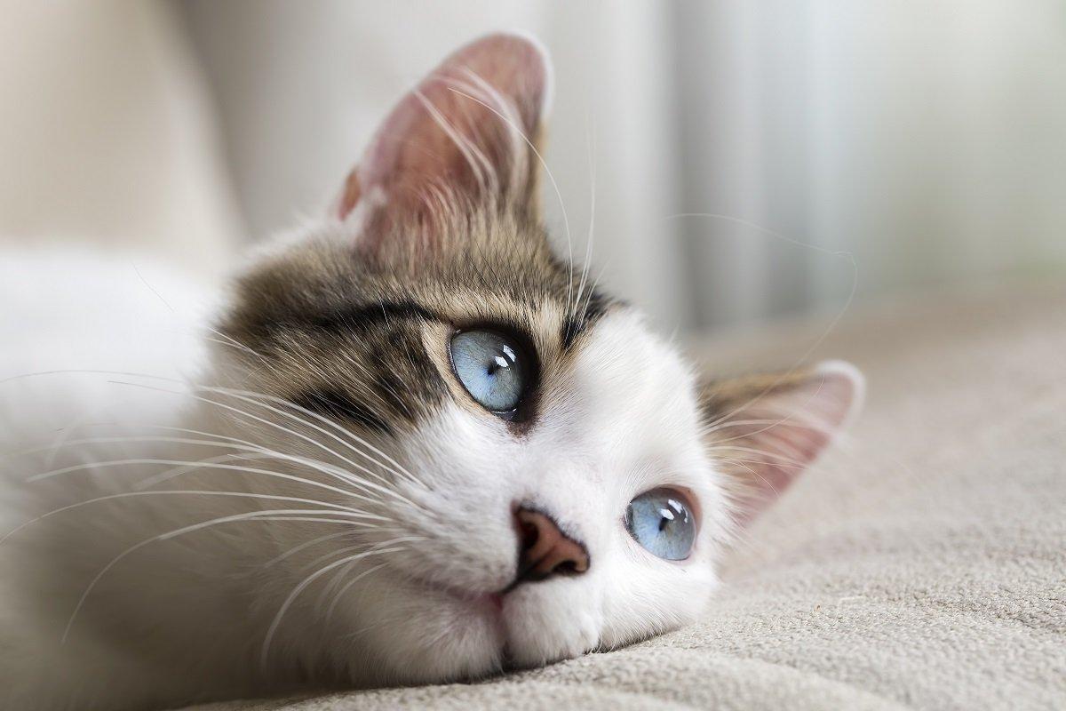 「猫と暮らすということ」とはこういうこと。猫好きの心と猫さまの御姿