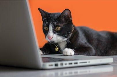 ネコにかかるお金、気になる医療費、みんなはどれくらい?