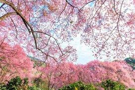 【格言から相場を読む】人の行く裏に道あり花の山-さすが千利休。目の付け所が違う