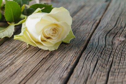 遺族年金Q&A「事実婚も対象?再婚したらどうなる?」FP解説