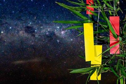 【麻羽たんぽぽの7月金運占い】12星座別!幸運への分かれ道!?今「やめること」「やること」